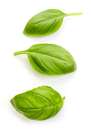 plante: basilic frais bio feuilles isolées sur fond blanc