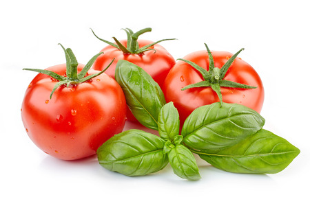 fresh tomatoes and basil leaf isolated on white background Фото со стока