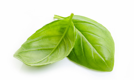 basils: green basil leaves isolated on white background