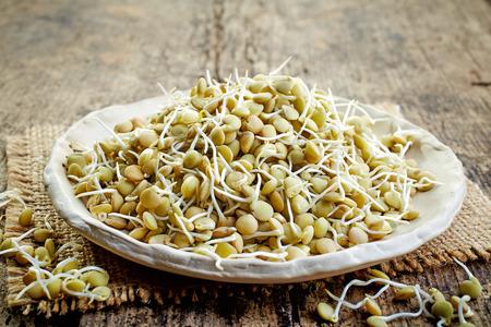 lenteja: semillas de lentejas germinadas en mesa de madera vieja Foto de archivo