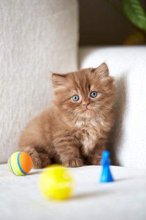 white sofa: beautiful small kitten on white sofa