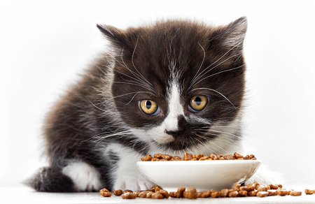 black hairs: kitten and bowl of cat food