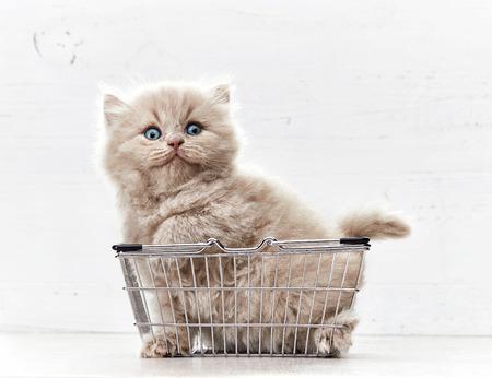 kleines Kätzchen in Metallkorb sitzen