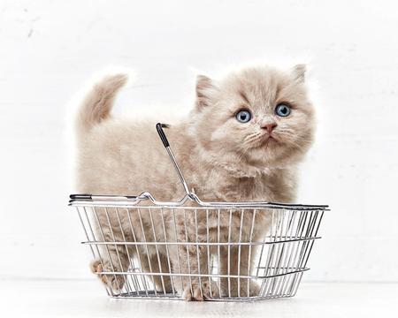 kleine Kätzchen in Warenkorb auf weißem Hintergrund