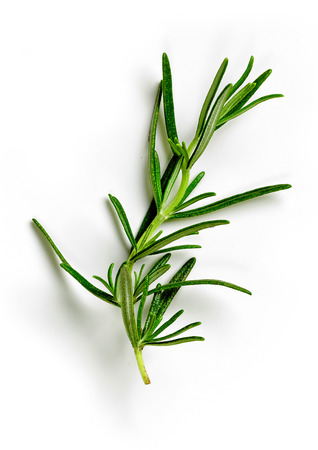 green rosemary isolated on white background, top view