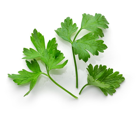 fresh green parsley leaves isolated on white background, top view Stok Fotoğraf - 60926009