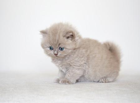 white sofa: small beautiful kitten on white sofa