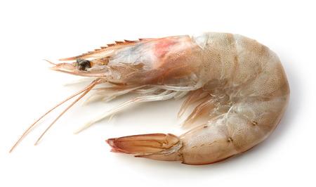 gamba: fresh raw prawn isolated on white background