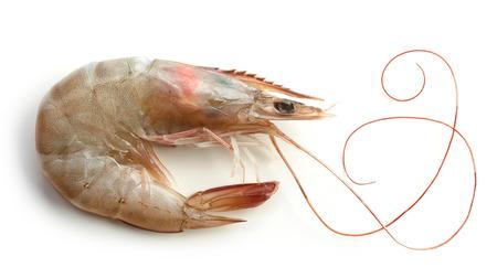 gamba: camarón crudo fresco aislado en el fondo blanco