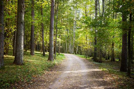 caminar: Camino en un bosque, brillante día de otoño, el enfoque selectivo