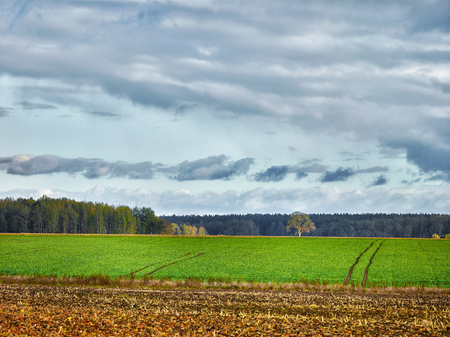 landscape with fields and clouds, selective focus