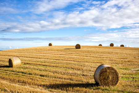 Scotland landscape with round yellow straw bales in a cut field in summer with a blue sky