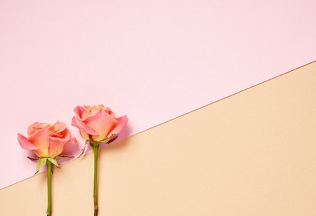 two pink roses on colorful paper background, top view