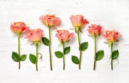 roze rozen op een witte houten achtergrond, bovenaanzicht Stockfoto