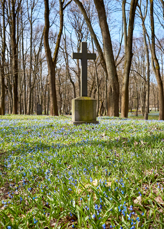 old historic cemetery cross and small blue wild flowers in springtime