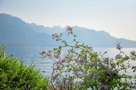 Geneva lake Embankment, Montreux, Switzerland