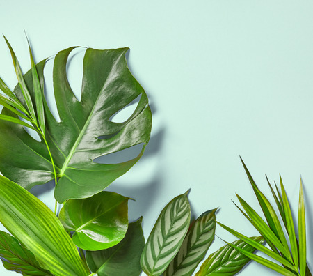 Various tropical leaves on a blue background, top view