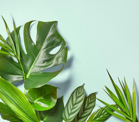 Verschiedene tropische Blätter auf einem blauen Hintergrund, Draufsicht
