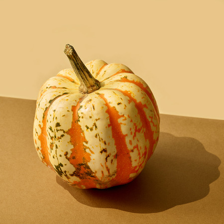 pumpkin with long shadow on colored paper background Stock Photo