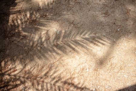 Shadows of tropical leaves on sand Stock Photo