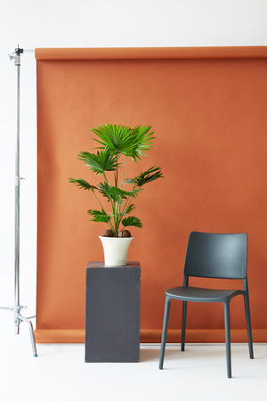 Photography studio equipment. Brown paper backdrop, black chair and palm