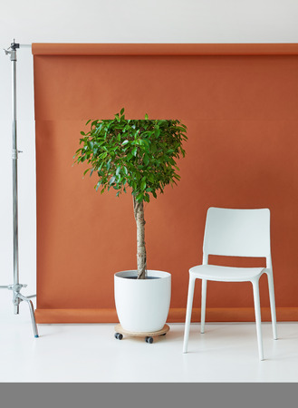 Photography studio equipment. Brown paper backdrop, white chair and tree Stock fotó