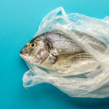 raw sea bream in plastic bag on blue paper background