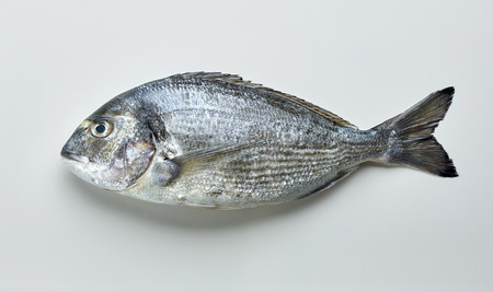 raw sea bream on light grey background, top view Stock fotó