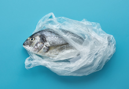 Raw sea bream in plastic bag on blue