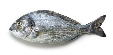 Raw sea bream isolated on white Stock Photo