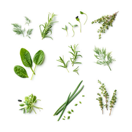 fresh herb and spices isolated on white background, top view Reklamní fotografie