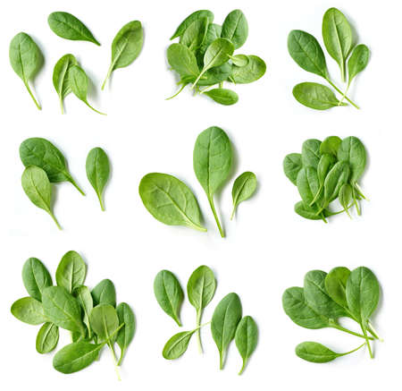 set of fresh green spinach leaves isolated on white background, top view