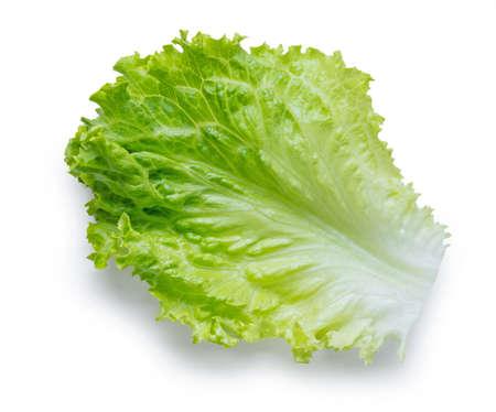 Fresh green lettuce leaf Zdjęcie Seryjne