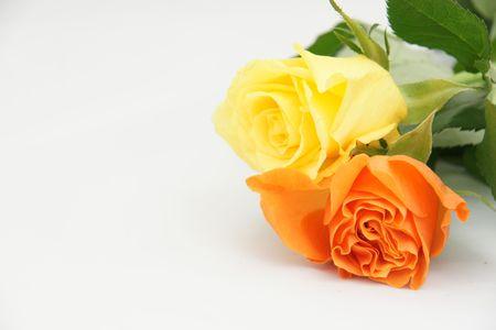 オレンジ色のバラ 写真素材