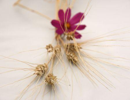 小麦と小さな花