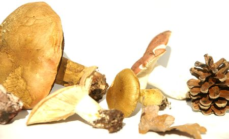 harmful: fungi, mold, wood, forest harvesting, land, hat, edible food, poisonous, harmful, threatening,