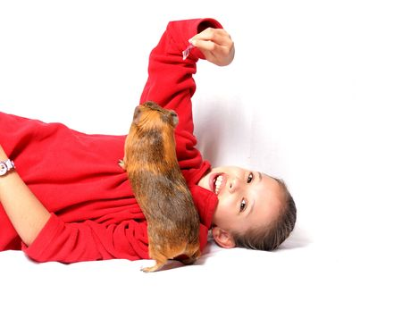 companion: girl, games, fun, friendship, give food, red sweater, smile, joy, kindness, sense, guinea pig, animal companion, pet, rodent, brown hair, white background, expression,    Stock Photo