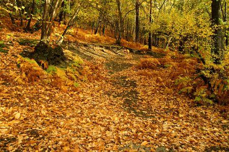 dead leaves: forestales, bosques, �rboles, naturaleza, hojas muertas, temporada, alfombras, relajante follaje, forma, a pie,