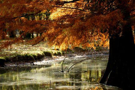 dead leaves: forestal, los bosques, los �rboles, la naturaleza, hojas muertas, temporada, alfombras, relajante follaje, color dorado, el agua, el estanque, la reflexi�n,