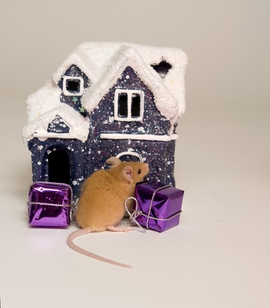 skinning: mouse, animal, vermin, pet, companion, skinning, rodent, tail, nose, house, snow, snow, winter season, gifts, Christmas feast Stock Photo