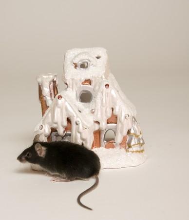 skinning: mouse, animal, vermin, pet, companion, skinning, rodent, tail, nose, house, snow, snow, winter season