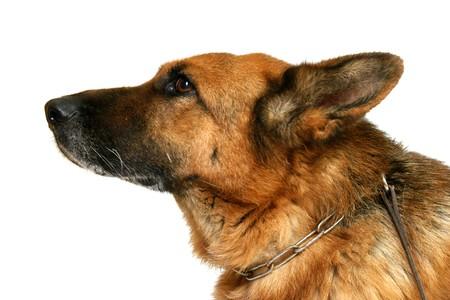 skinning: dog