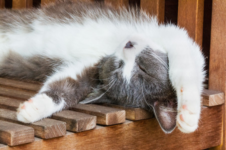 catnap: Gray and white fluffy kitten sleeps on his back on a wooden bench on a sunny summer day, stretching out legs behind head. Selective focus