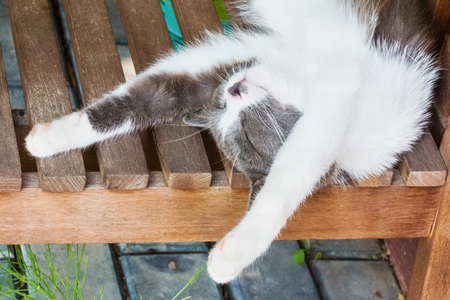 cat stretching: Gray and white fluffy kitten sleeps on his back on a wooden bench on a sunny summer day, stretching out legs behind head. Selective focus
