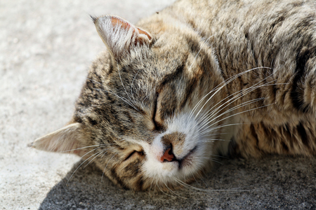 Big fluffy homeless cat with long whiskers sleeping outdoor. Stock Photo