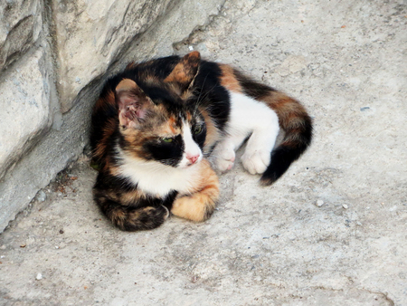 Tricolor (red, white and black) homeless cat lying in the yard.