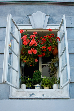 Opened old rustic window with pink flowers photo