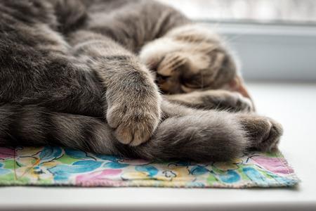 windowsill: Lazy cat sleeping on windowsill. Selective focus
