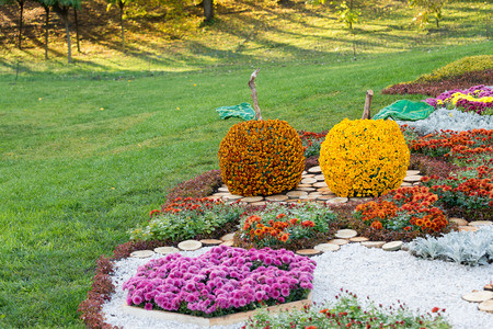 parkland: Flower beds in a shape of an apples with colorful chrysanthemums. Parkland in Kiev, Ukraine Editorial