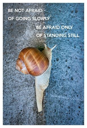 caracol: Cita inspirada con las palabras no tengáis miedo de ir poco a poco, tener miedo sólo quedarse quieto. Caracol grande que se arrastra en una pared de piedra